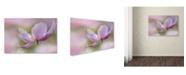 "Trademark Global Cora Niele 'Pink Anemone' Canvas Art - 32"" x 22"" x 2"""