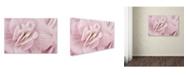 "Trademark Global Cora Niele 'Begonia Flower' Canvas Art - 32"" x 22"" x 2"""