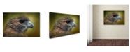 "Trademark Global Jai Johnson 'Red Tailed Hawk At Reelfoot' Canvas Art - 47"" x 30"" x 2"""