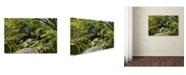 "Trademark Global Cora Niele 'The Chaos Of Huelgoat I' Canvas Art - 19"" x 12"" x 2"""