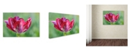 "Trademark Global Cora Niele 'Ruby Rembrandt Tulip' Canvas Art - 47"" x 30"" x 2"""