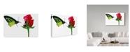 "Trademark Global Dana Brett Munach 'First Impressions' Canvas Art - 19"" x 12"" x 2"""