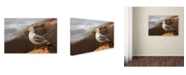 "Trademark Global Mike Jones Photo 'Seagull' Canvas Art - 24"" x 16"" x 2"""