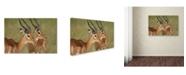 "Trademark Global Robert Harding Picture Library 'Impala' Canvas Art - 32"" x 22"" x 2"""