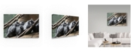 "Trademark Global Robert Michaud 'Monkeys' Canvas Art - 24"" x 16"" x 2"""