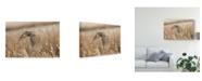 "Trademark Global Peter Stahl 'Great Horned Owl Field' Canvas Art - 19"" x 2"" x 12"""