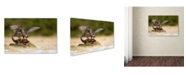 "Trademark Global Milan Zygmunt 'Peregrine Falcon' Canvas Art - 32"" x 22"" x 2"""