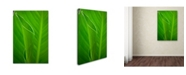 """Trademark Global PIPA Fine Art 'Leaves Canna Lily' Canvas Art - 16"""" x 24"""""""