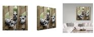 "Trademark Global Sharon Forbes 'Schnauzers' Canvas Art - 18"" x 18"""