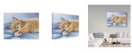 "Trademark Global Janet Pidoux 'Jack Cat' Canvas Art - 19"" x 14"""