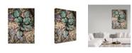 "Trademark Global Janice Sullivan 'Desert Rock Plant' Canvas Art - 14"" x 19"""