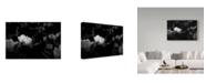 "Trademark Global Jason Matias 'Tulips White On Dark' Canvas Art - 19"" x 12"""