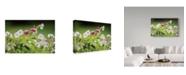 """Trademark Global Kurt Shaffer 'Pink Lantana' Canvas Art - 19"""" x 12"""""""