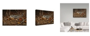 "Trademark Global Wilhelm Goebel 'Woodcock In Hiding' Canvas Art - 22"" x 32"""