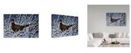 "Trademark Global Wilhelm Goebel 'Ring Neck Pheasant' Canvas Art - 22"" x 32"""