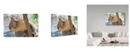 "Trademark Global Incredi 'Koala' Canvas Art - 32"" x 22"""