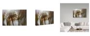 "Trademark Global Janice Sullivan 'Antelope Valley Ii' Canvas Art - 47"" x 30"""