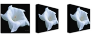 """Trademark Global Kathie McCurdy 'Moonflower Black and White' Canvas Art - 35"""" x 35"""""""