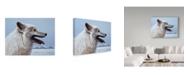 "Trademark Global Ron Parker 'Arctic Wolf Portrait' Canvas Art - 14"" x 19"""