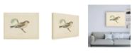 "Trademark Global Wild Apple Portfolio Mealy Redpole Print Canvas Art - 15.5"" x 21"""