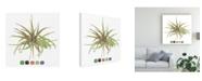 "Trademark Global Melissa Wang Air Plant Study II Canvas Art - 15.5"" x 21"""