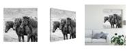 "Trademark Global PH Burchett Black and White Horses X Canvas Art - 15"" x 20"""