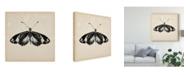 "Trademark Global Melissa Wang Butterfly Study VI Canvas Art - 20"" x 25"""