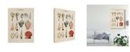 "Trademark Global Naomi Mccavitt Seashell Sketch II Canvas Art - 20"" x 25"""