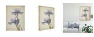 "Trademark Global Judy Stalus Parchment Flowers VIII Canvas Art - 15"" x 20"""