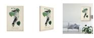 "Trademark Global John James Audubon Flycatcher and King Bird Canvas Art - 20"" x 25"""