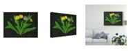 """Trademark Global Melissa Wang Wild Dandelion II Canvas Art - 20"""" x 25"""""""