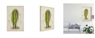 "Trademark Global Curtis Antique Cactus VI Canvas Art - 37"" x 49"""