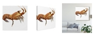 "Trademark Global Rick Novak Illustrated Lobster II Canvas Art - 27"" x 33"""