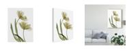 "Trademark Global Judy Stalus Xray Tulip I Canvas Art - 15"" x 20"""