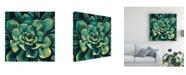 "Trademark Global Megan Meagher Succulent Bloom I Canvas Art - 20"" x 25"""