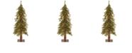 National Tree Company National Tree 3' Hickory Cedar Tree with 50 Clear Lights