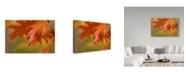 """Trademark Global Cora Niele 'Autumn American Oak Leaves' Canvas Art - 32"""" x 22"""" x 2"""""""