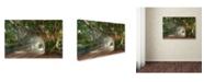 "Trademark Global Mike Jones Photo 'Boca Grande Banyon Street' Canvas Art - 32"" x 22"" x 2"""