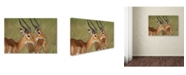 "Trademark Global Robert Harding Picture Library 'Impala' Canvas Art - 47"" x 30"" x 2"""