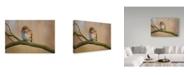 "Trademark Global Milan Zygmunt 'Ferruginous Pygmy Owl' Canvas Art - 32"" x 22"" x 2"""