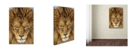 """Trademark Global Mike Centioli 'Serious Lion' Canvas Art - 19"""" x 12"""" x 2"""""""