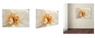 "Trademark Global PIPA Fine Art 'Eye of Peony' Canvas Art - 12"" x 19"""
