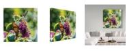 """Trademark Global Kurt Shaffer 'Sunlit Wings' Canvas Art - 14"""" x 14"""""""
