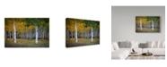 """Trademark Global J.D. Mcfarlan 'Dixie Forest, Ut Birch' Canvas Art - 24"""" x 16"""""""