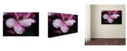 "Trademark Global PIPA Fine Art 'Raindrops on Wild Rose Color' Canvas Art - 30"" x 47"""