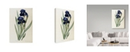 "Trademark Global Pierre-Joseph Redoute 'Iris Germanica German Iris' Canvas Art - 22"" x 32"""