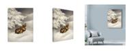 "Trademark Global Peggy Harris 'Peace On Earth Rabbit' Canvas Art - 35"" x 47"""