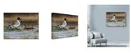 "Trademark Global Nigel Artingstall 'Pintail Ducks' Canvas Art - 24"" x 18"""