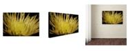 """Trademark Global Monica Fleet 'Inner Light' Canvas Art - 24"""" x 16"""""""