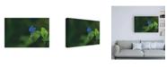 "Trademark Global Kurt Shaffer Photographs Blue and Green, a Profile in Nature Canvas Art - 15.5"" x 21"""